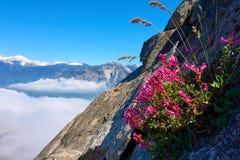 Het geïsoleerde bloem groeien op een steile rotsmuur over de wolken royalty-vrije stock foto's
