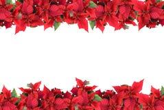 Het geïsoleerde frame van Kerstmis van poinsettia Stock Afbeeldingen