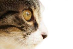 Het geïsoleerded oog van de kat, Stock Afbeelding