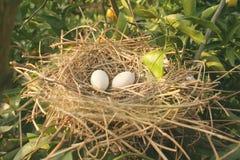 Het geïsoleerdet Nest van de Vogel Stock Afbeelding