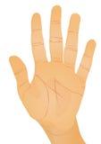 Het gebaar van de hand - palm Stock Foto