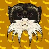 Het gebaarde gezicht van een geïsoleerde aap Stock Foto