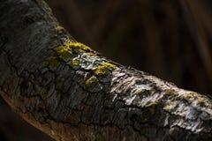 Het gebarsten behang van de boomtak Stock Foto