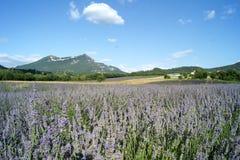 Het gebied de Provence van de lavendel Royalty-vrije Stock Foto's