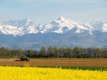 Het gebied en de bergen van de verkrachting Royalty-vrije Stock Afbeelding