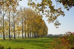 Het gebied en de bomen van de herfst Stock Afbeeldingen