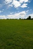 Het gebied en de bomen van het gras royalty-vrije stock afbeeldingen