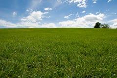 Het gebied en de bomen van het gras Stock Foto