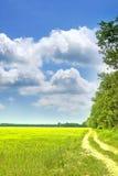 Het gebied en de hemel van de zomer stock afbeelding