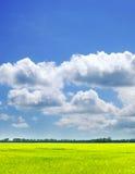 Het gebied en de hemel van de zomer Royalty-vrije Stock Afbeeldingen