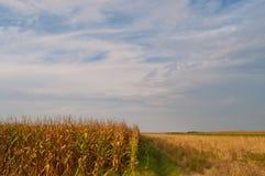 Het Gebied en de Hemel van het graan Stock Foto
