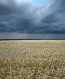 Het gebied en de onweerswolk van de tarwe Stock Foto's