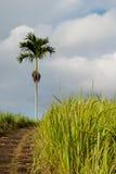 Het gebied en de palm van het gras Stock Fotografie
