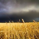 Het gebied en de regenboog van de tarwe op bewolkte hemel Royalty-vrije Stock Afbeeldingen