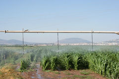 Het gebied en de regenboog van het graan Stock Foto