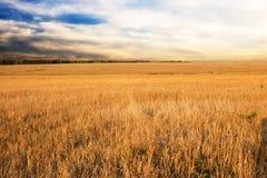 Het gebied en de zonsondergang van de herfst royalty-vrije stock afbeeldingen