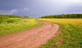 Het gebied met gele paardebloemen en een landweg na een donder Royalty-vrije Stock Fotografie