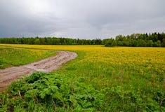 Het gebied met gele paardebloemen en een landweg na een donder Royalty-vrije Stock Afbeeldingen