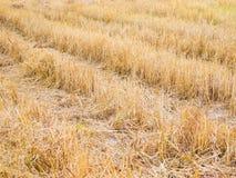 Het gebied na de oogst stock afbeeldingen
