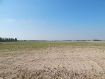 Het gebied onder blauwe hemel werd gezaaid door een tarwe stock afbeeldingen