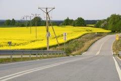 Het gebied schilderde de kleur van verkrachting Stock Foto's