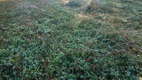 Het gebied van het besnoeiingsgras stock foto
