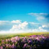 Het gebied van bloemen Royalty-vrije Stock Fotografie