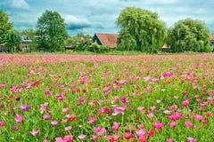 Het gebied van bloemen Royalty-vrije Stock Afbeeldingen