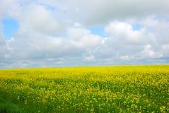 Het gebied van bloemen Royalty-vrije Stock Foto