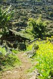 Het gebied van Canola stock afbeelding