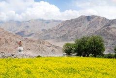 Het gebied van Canola, Ladakh Royalty-vrije Stock Afbeelding