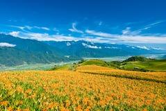 Het gebied van Daylily in de berg Royalty-vrije Stock Fotografie
