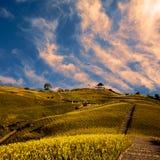 Het gebied van Daylily in de berg met mooie wolk Stock Afbeeldingen