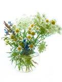 Het Gebied van de bloem Stock Afbeelding
