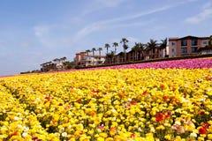 Het gebied van de bloem stock afbeeldingen