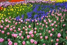 Het gebied van de bloem Royalty-vrije Stock Afbeeldingen