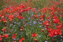 Het gebied van de bloem Royalty-vrije Stock Foto's