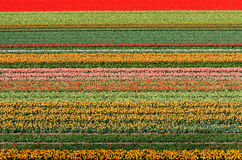 Het gebied van de bloem Royalty-vrije Stock Foto
