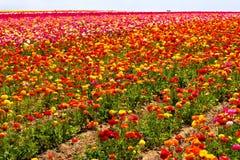 Het gebied van de bloem Stock Fotografie