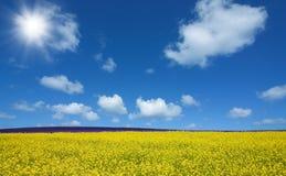Het gebied van de bloem en blauwe hemel met zon Royalty-vrije Stock Afbeeldingen