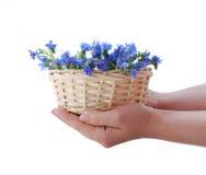 Het gebied van de bloem in mand Stock Foto's
