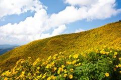Het gebied van de bloem op bovenkant de heuvel Stock Foto