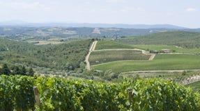 Het gebied van de chianti in Toscanië Royalty-vrije Stock Foto