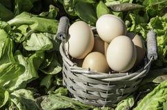 Het gebied van de eierenmand van salade Royalty-vrije Stock Fotografie