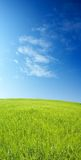 Het gebied van de gerst over blauwe hemel Royalty-vrije Stock Fotografie