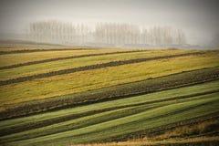 Het gebied van de herfst Royalty-vrije Stock Afbeeldingen