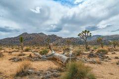 Het Gebied van de kwartelslentes vlak v??r een onweersbui De boom nationaal park van Joshua californi? De V.S. stock foto