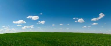 Het gebied van de landbouw Royalty-vrije Stock Foto