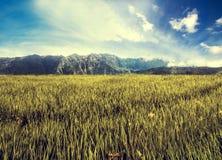 Het gebied van de landschapsweide met berg en blauwe hemel, uitstekende toon Royalty-vrije Stock Foto's