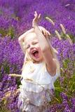 Het gebied van de lavendel Royalty-vrije Stock Foto's